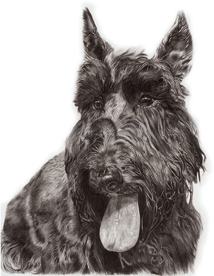 Molly the Scottie